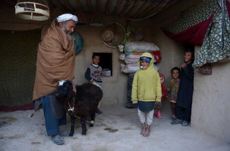 Afghanistan's Jogi tribe live on a knife edge: forced to abandon their nomadic lives after violence wrecked their traditional wandering grounds, they now face daily discrimination trying to carve a more sedentary existance