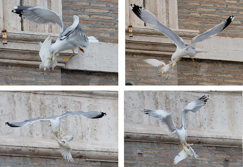 FOUR PICTURES COMBO - A dove which was freed by children flanked by Pope Francis during the Angelus prayer, is attacked by a seagull in St. Peter's Square, at the Vatican, Sunday, Jan. 26, 2014. Symbols of peace have come under attack at the Vatican. Two white doves were sent fluttering into the air as a peace gesture by Italian children flanking Pope Francis Sunday at an open studio window of the Apostolic Palace, as tens of thousands of people watched in St. Peter's Square below. After the pope and the two children left the windows, a seagull and a big black crow quickly swept down, attacking the doves, including one which had briefly perched on a windowsill on a lower floor. One dove lost some feathers as it broke free of the gull, while the crow pecked repeatedly at the other dove. The doves' fate was not immediately known. While speaking at the window, Francis appealed for peace to prevail in Ukraine. (AP Photo/Gregorio Borgia)