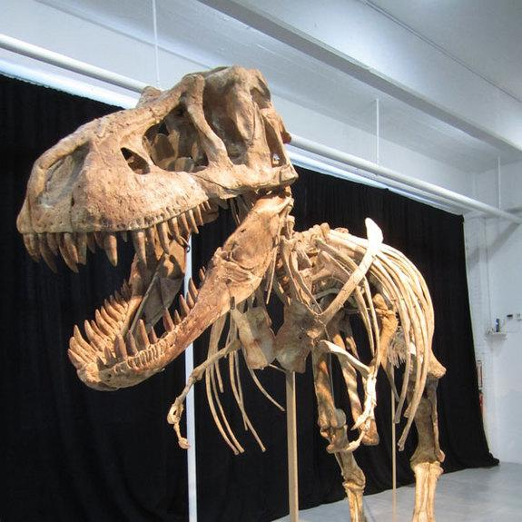 Dealer Pleads Guilty to Smuggling in Largest International Dino Case Ever