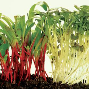 Easy foods to grow without a garden