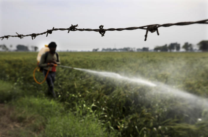 A laborer sprays pesticide in standing wheat crop in Moga district of Indian state of Punjab, Saturday, March 13, 2021. India is home to a fifth of the world's population but has only 4% of the world's water. The country is the largest extractor of groundwater in the world, and 90% of it is used for agriculture. And nowhere is the water shortage more pronounced than in Punjab state, where the India encouraged the cultivation of wheat and rice in the 1960s and has since been buying the staples at fixed prices to shore up national reserves. (AP Photo/Manish Swarup)