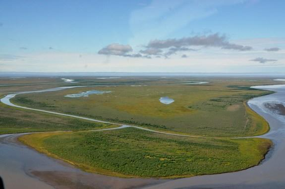 In contrast to the widespread loss of vegetation resulting from the storm surge, the Mackenzie Delta is generally a landscape of healthy, green vegetation.