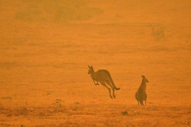 PHOTO: A kangaroo jumps in a field amidst smoke from a bushfire in Snowy Valley on the outskirts of Cooma, Austalia, Jan. 4, 2020. (AFP via Getty Images)