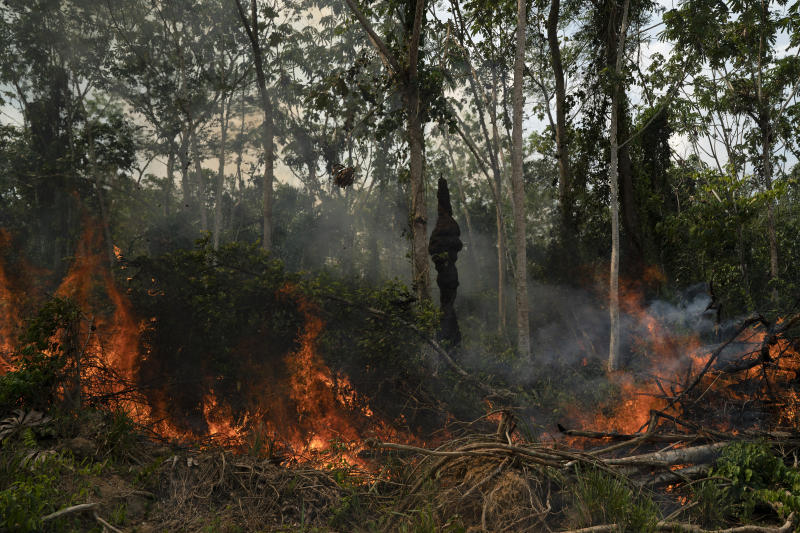 Freshly cut jungle begins to burn at the Nova Fronteira region in Novo Progresso, Brazil, Tuesday, Sept. 3, 2019. Brazilian President Jair Bolsonaro sent the military to help extinguish some fires. Last week, he passed a decree banning most fires for land-clearing for a period of 60 days, although he later limited the ban to the Amazon. (AP Photo/Leo Correa)