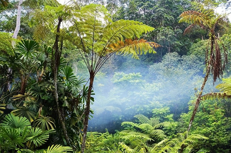 East Malaysia's rainforests are estimated to be 140 million years old. ― Picture from Unsplash