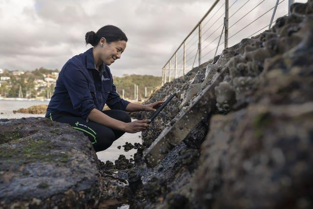 Dr Maria Vozzo conducts a biodiversity count on a Living Seawall fitted to sea defences in Sydney, Australia