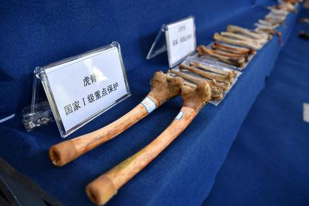 FILE PHOTO: Tiger bones and products made from endangered animals seized by Kunming Forest Police are displayed during a news conference in Kunming, Yunnan province, China November 23, 2018.   Liu Ranyang/CNS via REUTERS/File Photo