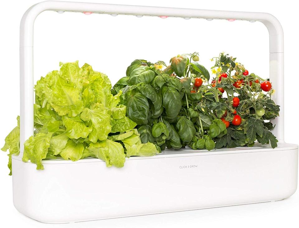 <p>This <span>Click & Grow Smart Garden 9 Self Watering Indoor Garden</span> ($200) is ideal for someone who lives in a place with no outdoor space. They can grow their own herbs and vegetables indoors.</p>