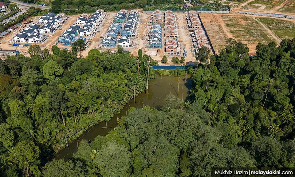 Another Selangor forest at risk of being developed