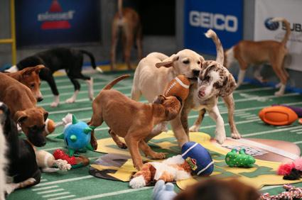 "<div class=""caption-credit"">Photo by: Damian Strohmeyer, Animal Planet</div><div class=""caption-title""></div>The main event starts at 3 p.m. EST on February 2 on Animal Planet. As you wait for the most anticipated event of the season, check out the starting lineup of some of our favorite Puppy Bowl players. And be sure to head to the <a rel=""nofollow"" href=""http://animal.discovery.com/"" target=""_blank"">Animal Planet</a> site later this month to create your own Puppy Bowl fantasy league."