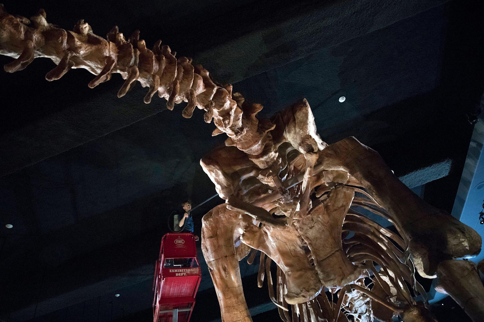 Twice the size of the Hollywood sign: One of the largest dinosaur species in the world discovered in Australia – Yahoo News