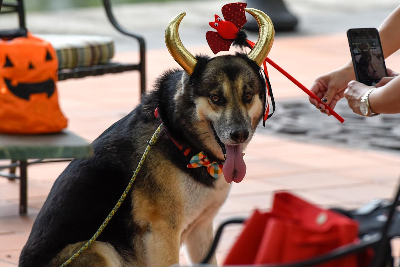 <p>Dogs at Howlloween at the Grand Copthorne Waterfront Hotel.(Photo: Bryan Huang/Yahoo Lifestyle Singapore)</p>
