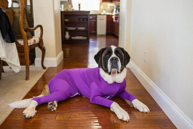 This full-coverage spandex suit for pups is touted to help with both barking and shedding. (Photo: The Shed Defender)