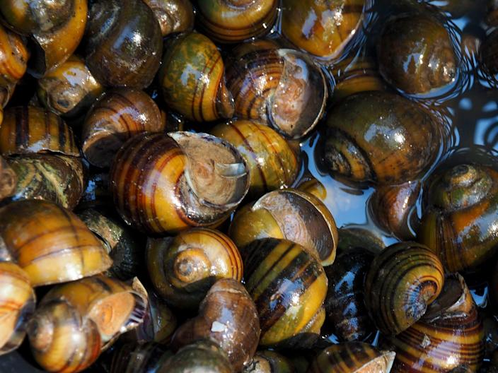 """Periwinkles are a popular snack in British coastal towns, where they're more commonly known as """"winkles."""""""