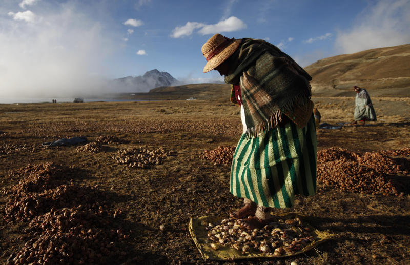 """In this July 22, 2013, Aymara Indian Ramona Bustos walks barefoot on potatoes to remove frozen dew and the peels as she works in extremely cold temperatures on La Cumbre mountain on the outskirts of La Paz, Bolivia. For centuries, people in Bolivia's high Andes have eaten freeze-dried potatoes, taking advantage of freezing temperatures and the burning sun to prepare the local staple called """"chuno."""" """"I step on the potatoes with a lot of force to prepare the chuno, which will last me a long time. We will not go hungry,"""" said Bustos. (AP Photo/Juan Karita)"""