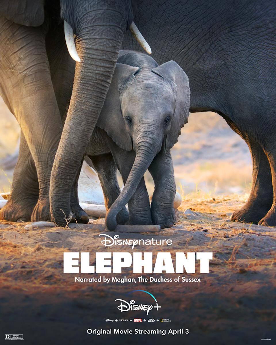 Elephant, Narrated by Meghan, The Duchess of Sussex. Coming to Disney+ on April 3, 2020. Image courtesy of Disney.