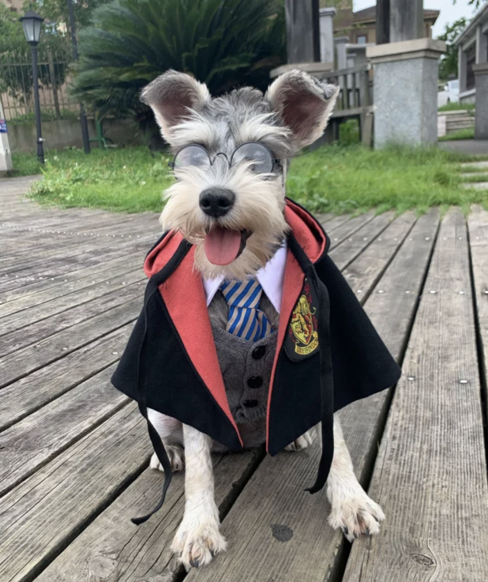 Harry Potter Wizard Dog Halloween Costume with black cape and glasses