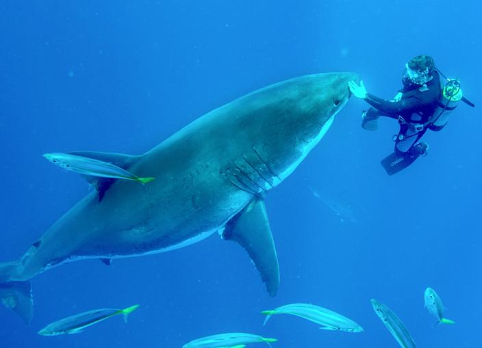 Martin Kochling swimming with a great white shark in Guadalupe, Mexico. (Photo: Jean-Marie Ghislain/Caters News)