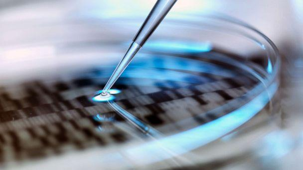 PHOTO: A stock photo depicts DNA testing in a petri dish. (STOCK PHOTO/GETTY IMAGES)