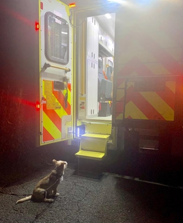 Jack the terrier refusing to move outside the ambulance in Portalington, Ireland.