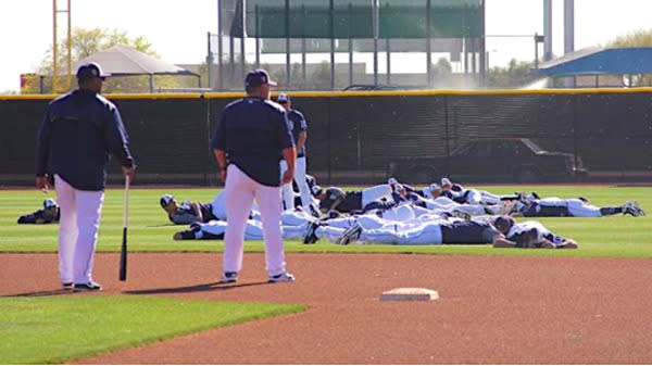 Stinging For The Fences: Bees Swarm Padres Training Camp Again