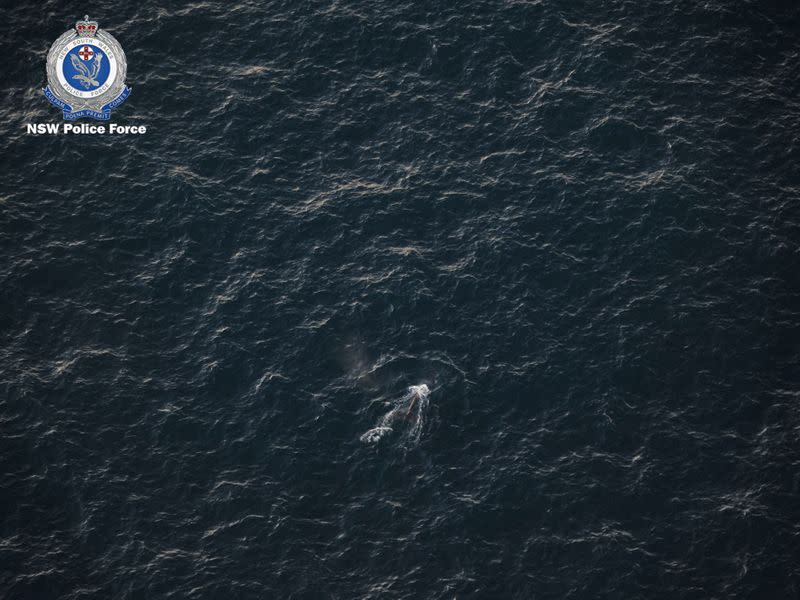 An aerial view of an entangled whale in this handout picture, off the coast of New South Wales, Australia
