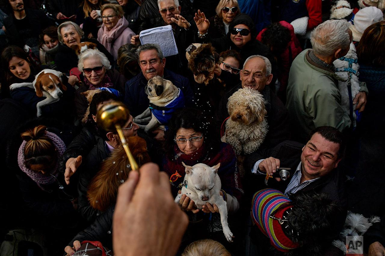 <p>The hand of Santiago Fulero, Major priest of the Saint Pablo church, blesses people with their pets outside of the church, during the feast of St. Anthony, Spain's patron saint of animals, in Zaragoza, northern Spain. The feast is celebrated each year in many parts of Spain and people bring their pets to churches to be blessed. (AP Photo/Alvaro Barrientos) </p>