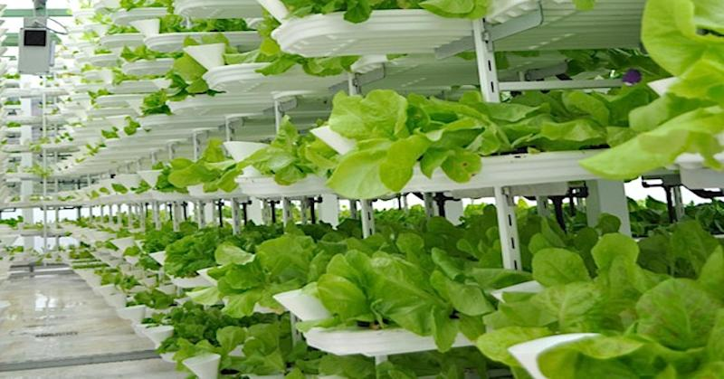 Vertical farming: A hot new area for investors