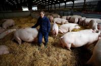 Farmer Kate Morgan stands with some of her breeding sows on her family pig farm near Driffield