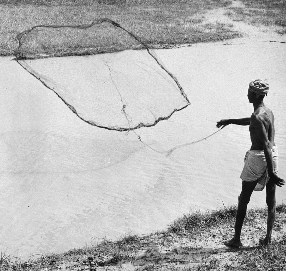circa 1950: A man casting a net with weights tied to its edges into an irrigation ditch in India to catch small fish. (Photo by Richard Harrington/Three Lions/Getty Images)