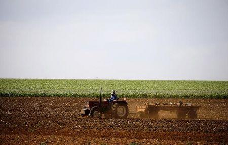 Farmers work on a land outside Lichtenburg, a maize-growing area in the North West province, South Africa