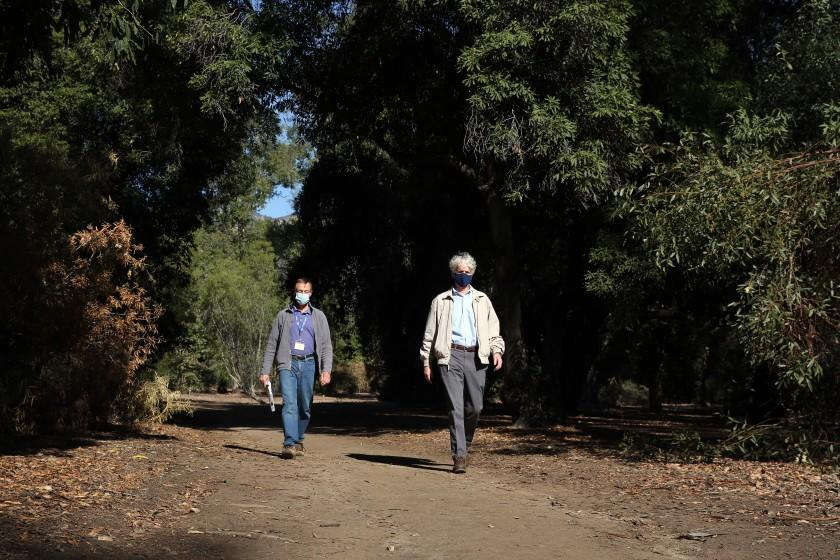 LOS ANGELES, - JANUARY 15: Jim Henrich, left, and Richard Schulhof, right, above the tall standing trees in the Australia section at the Los Angeles County Arboretum where the rush to manage storm water made communities propose cutting down hundreds of rare trees to create retention basins for urban runoff in Arcadia on Friday, Jan. 15, 2021 in Los Angeles, California. The section might lose about 20 percent of its trees. (Dania Maxwell / Los Angeles Times)
