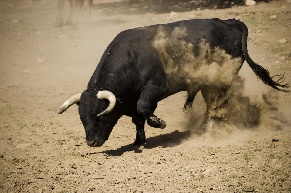 Bull Pawing the Ground (Photo by: Digital Light Source/Universal Images Group via Getty Images)