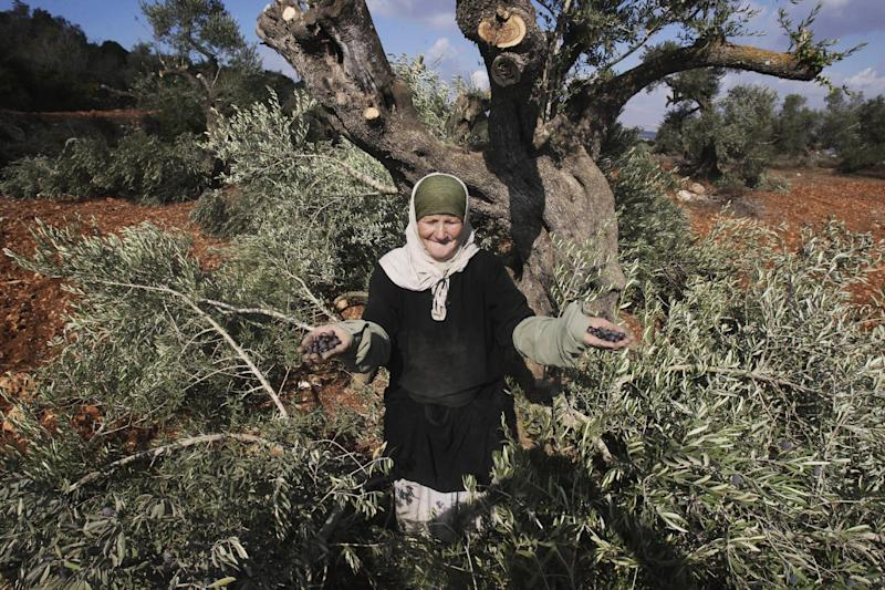 A Palestinian elderly woman holds olives collected from broken olive tree branches in the village of Qusra, northern West Bank, Tuesday, Oct. 9, 2012. Palestinian farmers say Jewish settlers from the nearby settlement of Eli cut more than 70 olive trees overnight. Olives are the backbone of Palestinian agriculture. (AP Photo/Nasser Ishtayeh)