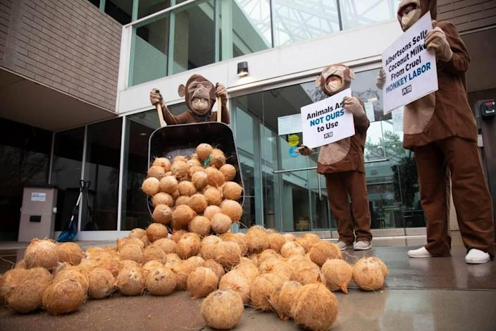 Protesters from People for the Ethical Treatment of Animals dump coconuts outside the Boise headquarters of Albertsons Cos. The stunt was part of a PETA campaign to pressure Albertsons to stop carrying Chaokoh coconut milk. PETA says the Thailand company uses coconuts harvested by chained and caged monkeys.