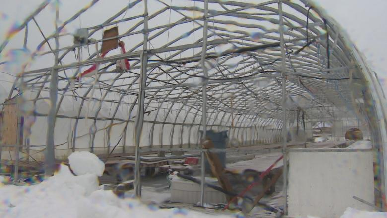 Greenhouse damage at Lester's Farm won't delay spring opening
