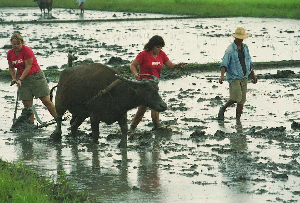 """""""It's Okay, Run Them Over! """" -- Teams must lead the Carabao through a muddy field in Victoria, Philippines, to find their next clue in THE AMAZING RACE 5, broadcast Tuesdays (10:00-11:00PM, ET/PT) on the CBS Television Network. pictured here: Karen and Linda Photo: Travis Pierson/CBS ©2004 CBS BROADCASTING INC. ALL RIGHTS RESERVED."""