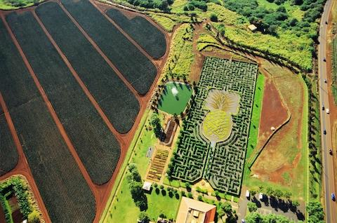 Hawaii claims to possess the world's largest maze - Credit: GETTY