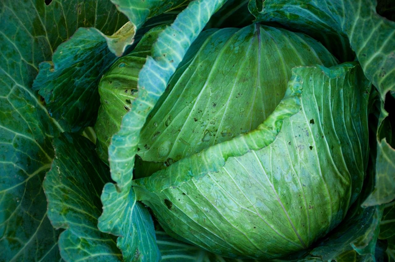 "<p>The cabbage soup diet is perhaps the most notorious fad diet in existence. The premise is simple: Eat a lot of cabbage soup and lose up to 10 pounds in a week.<br />While you are <a rel=""nofollow"" href=""https://www.everydayhealth.com/diet-nutrition/cabbage-soup-diet.aspx"">allowed</a> to eat some meat, fruits and vegetables during that time, the diet relies on mainly consuming a homemade cabbage soup that is very low in calories.<br />The soup recipe itself is low in carbohydrates, protein, vitamins and minerals but high in fiber and sodium, which can cause flatulence and frequent trips to the bathroom.<br />The cabbage soup diet has been called a ""quick fix"" because any results are often reversed as soon as you resume normal eating, and can potentially disrupt your metabolism causing weight gain.<br /><span>(Image via Getty Images)</span> </p>"