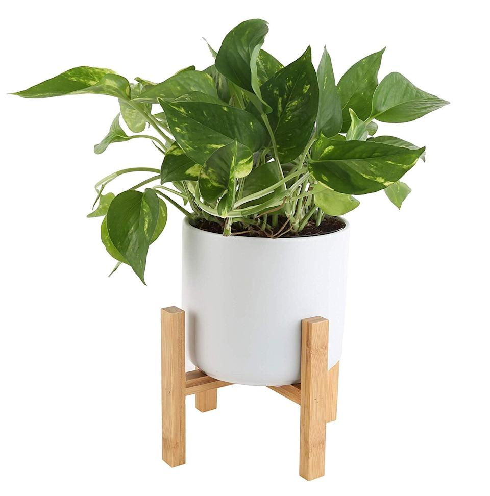 <p>Give your home an update and a breath of fresh air with this <span>Costa Farms Golden Pothos with Stand</span> ($59), which comes in its very own mid-century modern planter.</p>