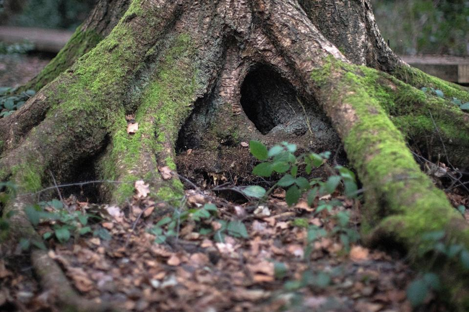 Restoring UK's native woodland a 'no-brainer' for helping to tackle climate and biodiversity crises, scientists say (Getty Images)