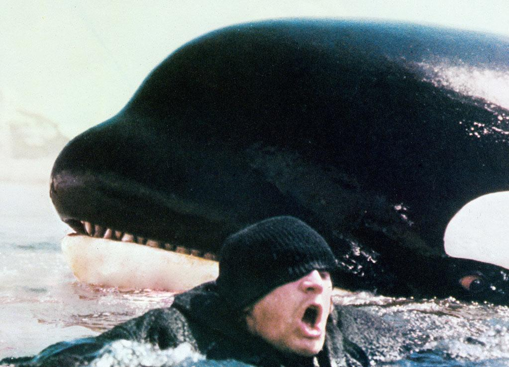 "8. KILLER WHALE - <a href=""http://movies.yahoo.com/movie/1800103620/info"">Orca</a> (1977)   Nope, this isn't the friendly star of ""Free Willy"" nor is it SeaWorld's lovable Shamu; it's the fictional, revenge-seeking marine mammal, who killed many off the coast of Canada in the late '70s."