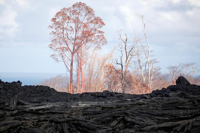 <p>Trees stand near a lava flow on the outskirts of Pahoa during ongoing eruptions of the Kilauea Volcano in Hawaii, June 6, 2018. (Photo: Terray Sylvester/Reuters) </p>
