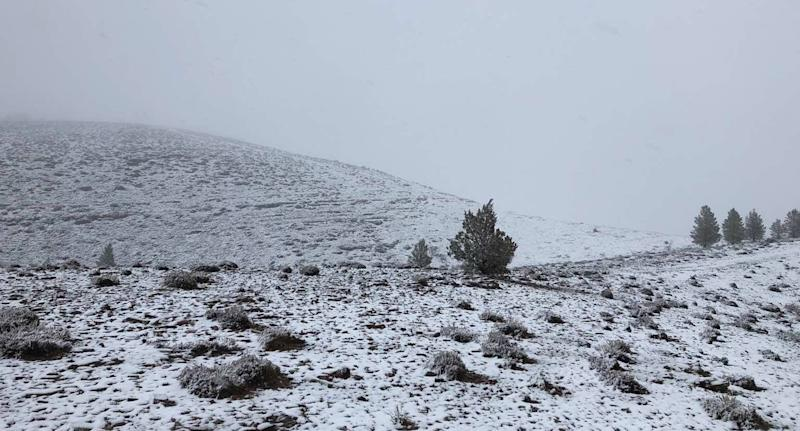 Skytrek Willow Springs Station's paddock is pictured covered in snow in South Australia.
