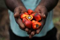 Worker holds palm oil fruits as he poses at a plantation in Slim River