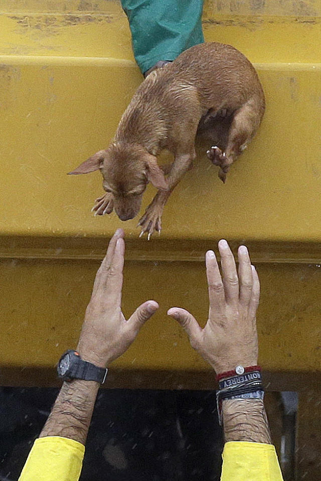 <p>A man reaches to take a small dog from a rescue truck at the east Sam Houston Tollway as evacuations continue from flooding in Houston, Monday, Aug. 28, 2017, following Tropical Storm Harvey. (Photo: Melissa Phillip/Houston Chronicle via AP) </p>
