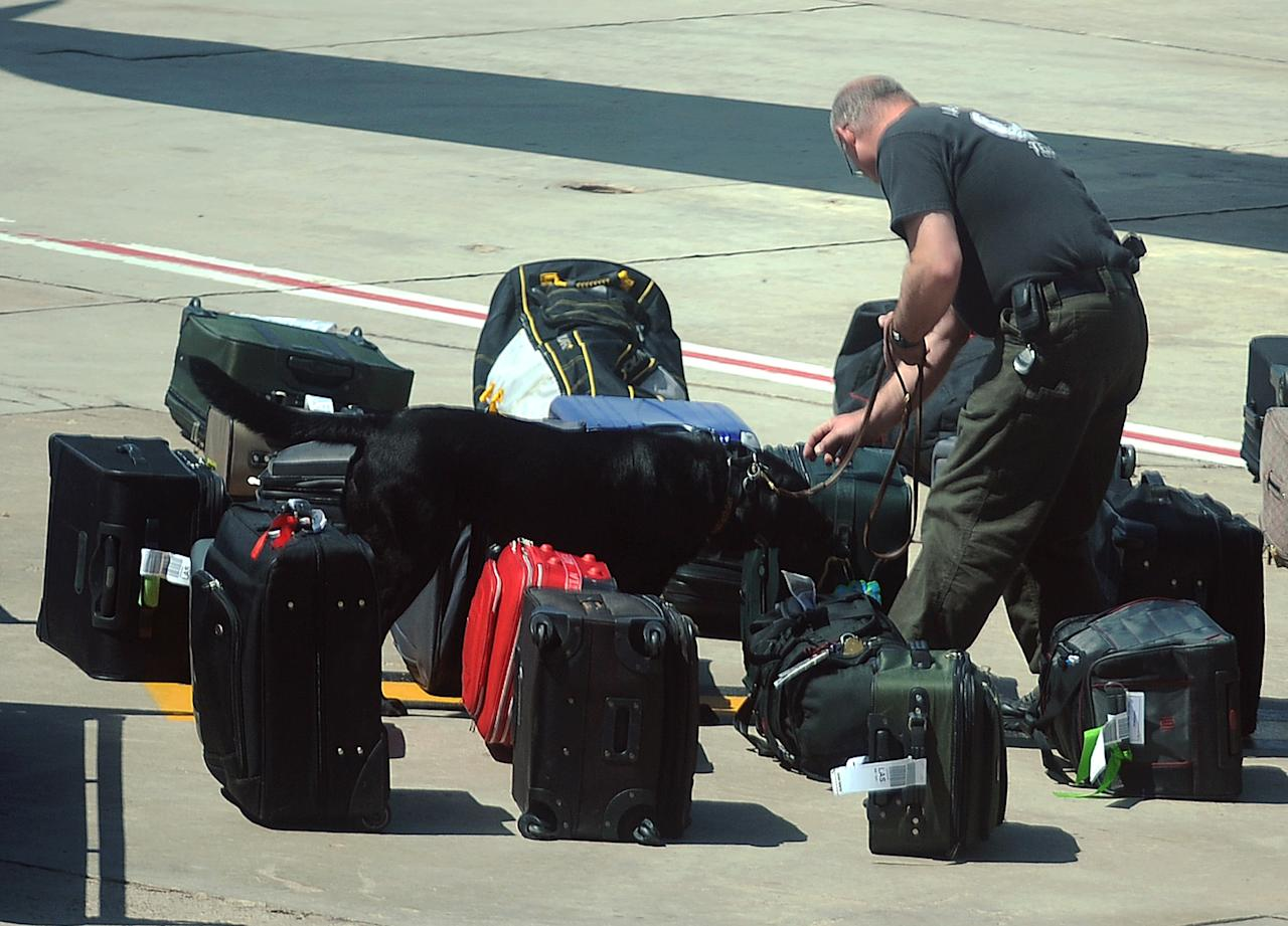 Authorities use explosive sniffing dogs dogs to search luggage after an emergency landing at Rick Husband Amarillo International Airport in Amarillo, Texas, after an unruly pilot caused a Las Vegas-bound JetBlue flight to be diverted Tuesday, March 27, 2012. Passengers said the pilot screamed that Iraq or Afghanistan had planted a bomb on the flight, was locked out of the cockpit, and then tackled and restrained by passengers. The pilot who subsequently took command of the aircraft elected to land in Amarillo at about 10 a.m., JetBlue Airways said in a statement. (AP Photo/The Amarillo Globe News, Roberto Rodriguez)