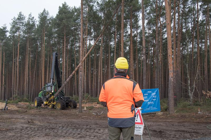 14 February 2020, Brandenburg, Grünheide: Trees are felled with a wood harvester. The US electric car manufacturer Tesla is clearing the forest for its new plant in Grünheide. The Brandenburg Environment Ministry announced on 13.02.2020 that the State Office for the Environment had granted permission for an early start of the clearing of a forest area of almost 92 hectares. Photo: Jörg Carstensen/dpa (Photo by Jörg Carstensen/picture alliance via Getty Images)