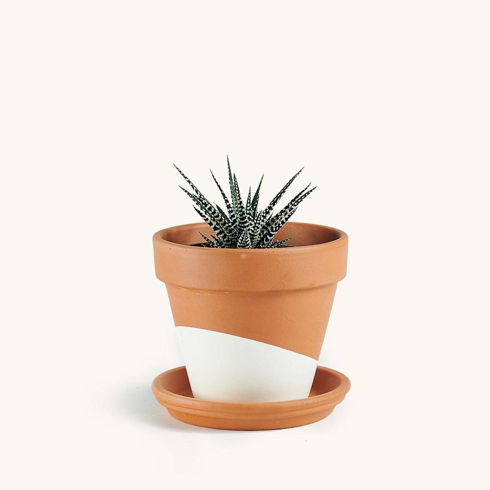 """<p><strong>Horti</strong></p><p>heyhorti.com</p><p><strong>$14.00</strong></p><p><a href=""""https://heyhorti.com/collections/plant-selection/products/haworthia?variant=39345192173745"""" rel=""""nofollow noopener"""" target=""""_blank"""" data-ylk=""""slk:SHOP NOW"""" class=""""link rapid-noclick-resp"""">SHOP NOW</a></p><p>Aloe's more interesting sister, this succulent is native to South Africa and would look PERFECT on your nightstand. Just saying….</p>"""