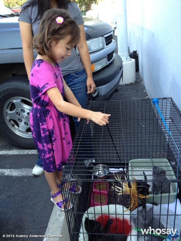 "The only thing cuter than Lily: <a href=""http://www.whosay.com/aubreyandersonemmons/photos/209319"">Lily playing with kittens</a>! ""There are kitties on the #ModernFamily set today!!! Yaaaay!"""